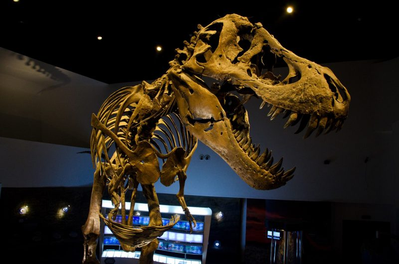 Stan, the T-Rex  Photo from Mind Museum Official FB